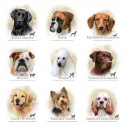 Dog Breeds Available May /june 2013