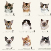 Cat Breeds Delivery May/June 2013
