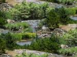 ES425-green-creeks