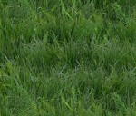 250 Green