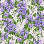 3565-001 Hillsdale-hyacinth