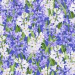 3565-002 Hillsdale-iris