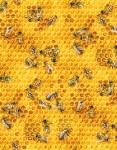 510 Honey