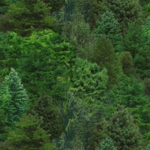 ES176 GREEN