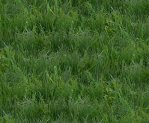ES250 GREEN