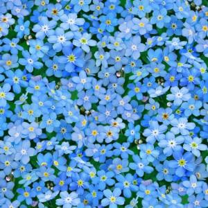 ES542 BLUE