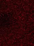 3584-005 Anemone-Garnet
